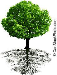 drzewa, podstawy