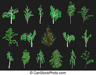 drzewa., wektor, komplet
