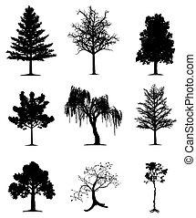 drzewa, zbiór