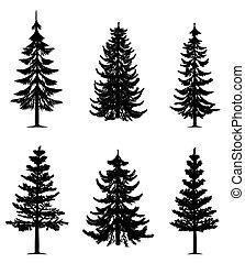 drzewa, zbiór, sosna