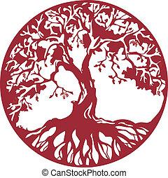drzewo, dąb