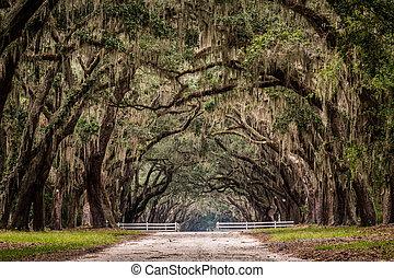 drzewo, droga, żywy, tunel, brud, przez, dąb