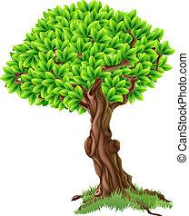 drzewo, ilustracja
