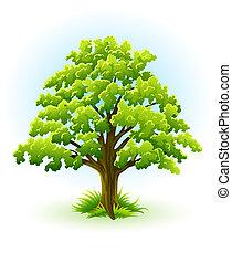 drzewo, jednorazowy, dąb, zielony, leafage