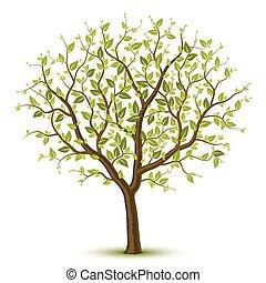 drzewo, leafage, zielony
