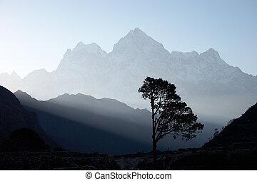 drzewo, nepal, samotny, wschód słońca, himalaje