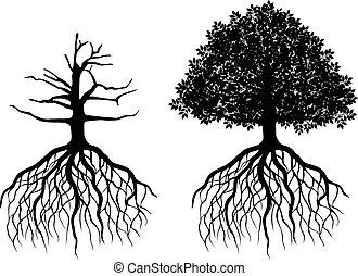 drzewo, odizolowany, podstawy