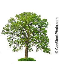 drzewo, odizolowany