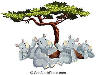 drzewo, pod, nosorożec, grupa