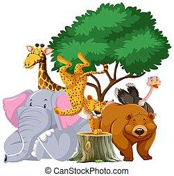 drzewo, pod, zwierzęta, grupa