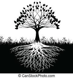 drzewo, podstawy, sylwetka