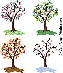 drzewo, pory, komplet, wektor, cztery, jabłko