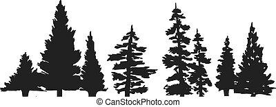 drzewo, sylwetka, sosna
