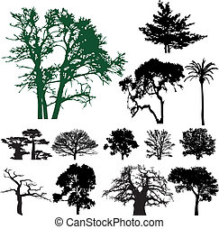 drzewo, sylwetka, zbiór