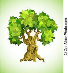 drzewo, symbol, ekologia, dąb, zielony