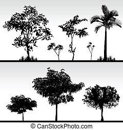drzewo, trawa, sylwetka