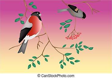 drzewo., twilight., vector., ptaszki