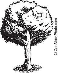 drzewo, wektor, dąb, ilustracja