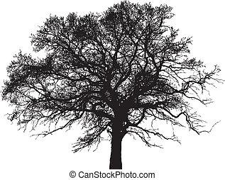 drzewo, wektor, sylwetka