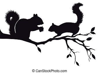 drzewo, wektor, wiewiórki