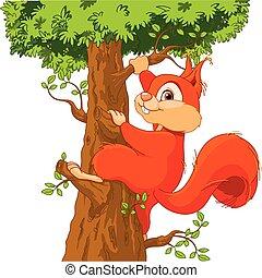drzewo, wiewiórka