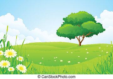 drzewo, zielony krajobraz