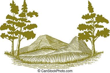 drzeworyt, pustynia, scena