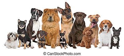 dwanaście, grupa, psy