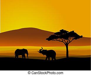 dziewiczość, afryka