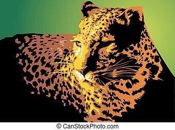 dziki, jaguar, kot