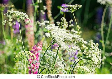 dziki, lato, kwiaty, ogród