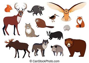 dziki, litery, wektor, komplet, kanadyjczyk, ilustracja, las, europejczyk, rysunek, zwierzęta, odizolowany