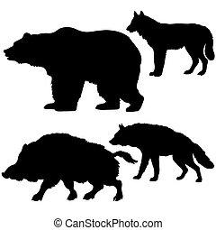 dziki, sylwetka, niedźwiedź, tło, knur, wilk, hiena, biały
