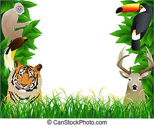 dzikie zwierzę