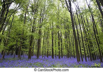 dzwonek, wiosna, las, wibrujący, krajobraz, dywan