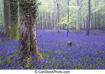 dzwonek, wiosna, las, wibrujący, mglisty, krajobraz, dywan