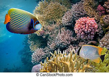 egipt, koralikowa rafa, czerwone morze