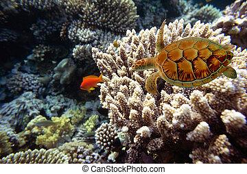 egipt, ryby, koral, sea., czerwony