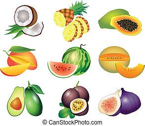 egzotyczny, wektor, komplet, owoce