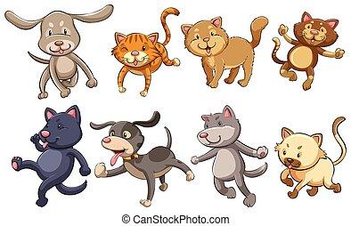 figlarny, koty, grupa, psy