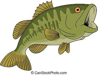 fish, bas