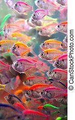 fish, neon