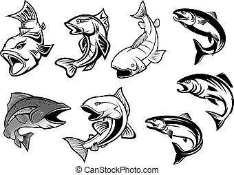 fish, rysunek, komplet, salmons