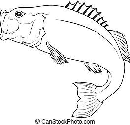 fish, skokowy
