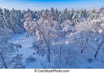forest., antena, zima, prospekt