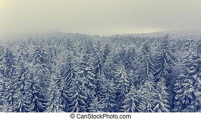 forest., antena, zima, sosna, prospekt