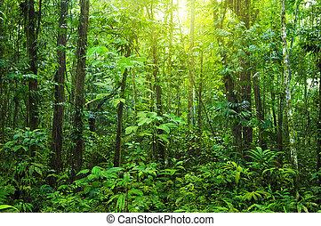 forest., gęsty