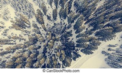 forest., prospekt, zima, antena