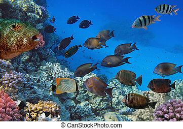 fotografia, koral, kolonia