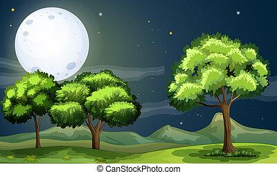 fullmoon, jasny, zielony las, czysty, pod